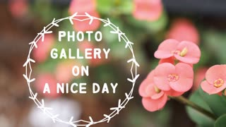 Photo Gallery On A Nice Day