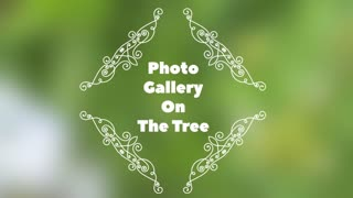 Photo Gallery On The Tree Of Love