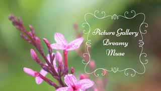 Picture Gallery Dreamy Muse