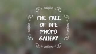 The Tree Of Life Photo Gallery