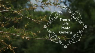 Tree Of Life Photo Gallery