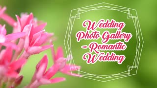 Wedding Photo Gallery Romantic Wedding