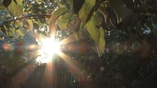 Backyard Garden Sunrise Real Time