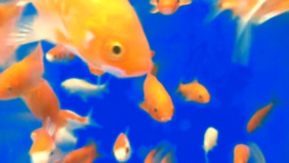 Blue Screen Goldfish