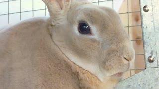 Bunny Rabbit Close Up