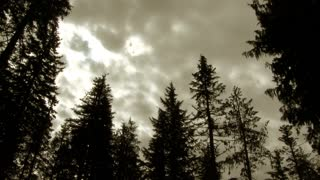 Cloudy Day Over Dark Forest Time Lapse