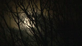 Dark And Scary Night Moon Through Dead Tree
