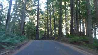 Driving On Narrow Forest Road