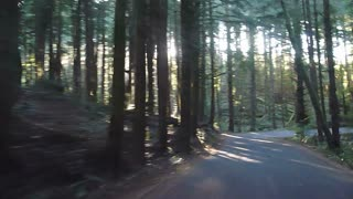 Driving On Old Forest Growth Road