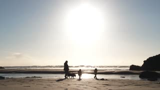 Family Beach Day With Their Dogs