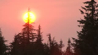 Fiery Sunset In Forest Time Lapse