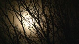 Full Moon And Rickety Old Tree