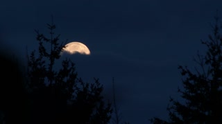 Full Moon In Cloudy Forest Time Lapse
