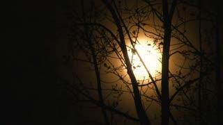 Full Warm Moon On Windy Night