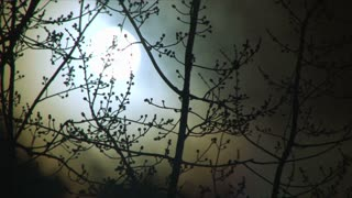 Glowing Night Full Moon And Tree Time Lapse
