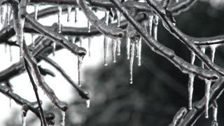 Ice Storm Frozen Tree In Winter