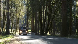 Logging Truck Driving Through Forest Road