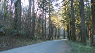 Logging Truck In Oregon Forest