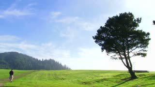 Man Walking Down Long Path With One Large Tree