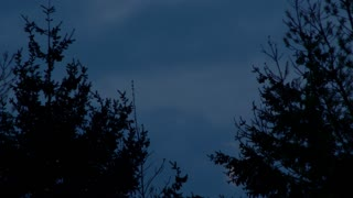 Moon Between Trees Time Lapse
