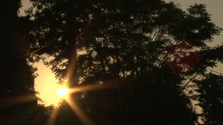 Morning Sunrise Through Trees Time Lapse