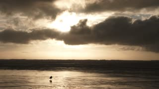 Ocean Sunset Seagull Fly Away