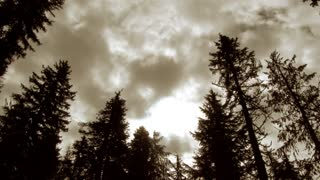 Pacific Northwest Forest And Cloudy Sky