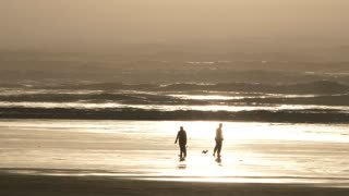 People And Dogs On Sunny Ocean Shore