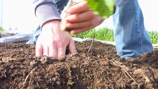 Person Planting New Garden