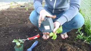 Person Planting Organic Squash