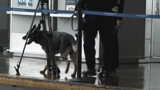 Police Dog Searching For Explosives