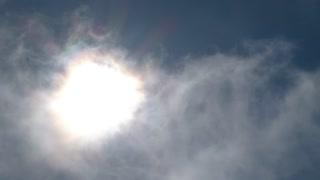 Soaring Birds In Sunny Sky