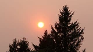 Sun Burns Through Smoky Forest Sky