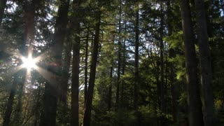 Sunrise Through Forest Trees Time Lapse