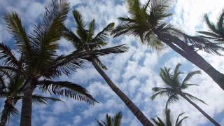Tropical Palm Trees With Clouds Passing By