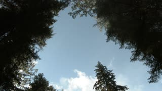Window To The Sky Through Forest Trees
