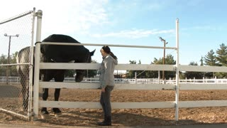 Woman Petting Large Horse On Ranch