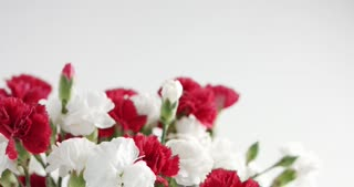 Red and white carnation flowers stock video footage videoblocks red and white carnation flower rotation mightylinksfo