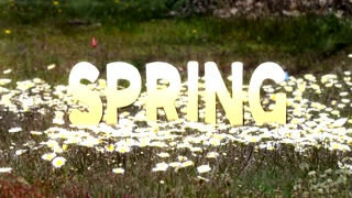 Spring Text Intro Opener