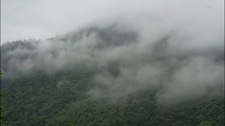 Timelapse of clouds over thick green forest in China.