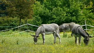 Donkeys at the french countryside