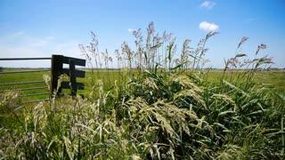 Dutch landscape with grass