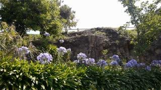 Flowers at Ile de Brehat, Bretagne France PAN