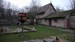 French farm, bird house and chickens