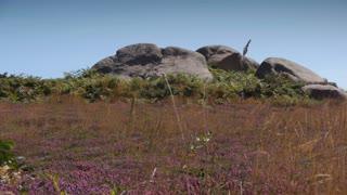 Granite rocks at Ploumanach. Bretagne France