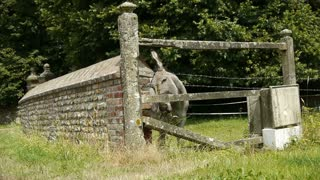 Old stone fence and a donkey at the countryside