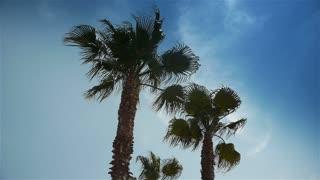 Palm trees at Cote D'Azur France