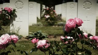 Pink roses at a canadian memorial cemetery