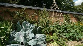Vegetables at a botanical garden