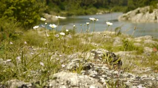Wild herbs at Gardon river, France